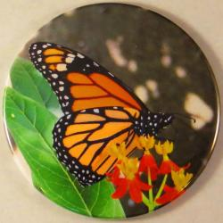 Monarch Butterflies Magnet or Pin